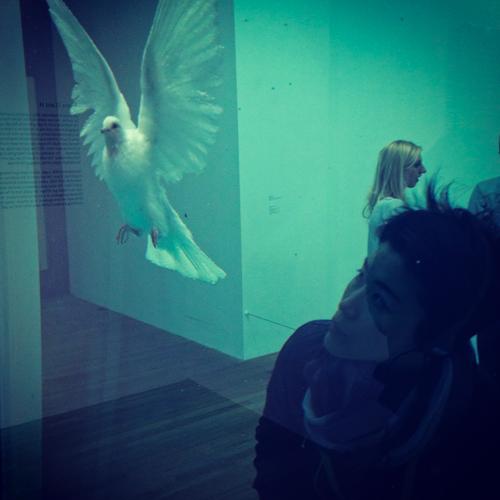 Damien Hirst Tate Instagram2