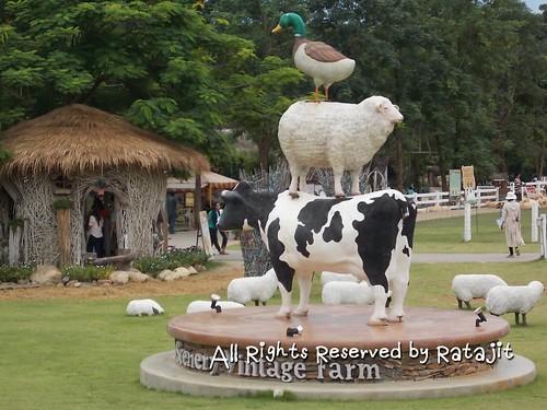 ฟาร์มแกะ Scenery Vintage Farm