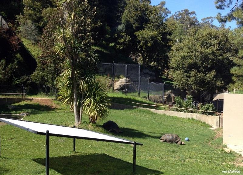 Oakland Zoo (7)