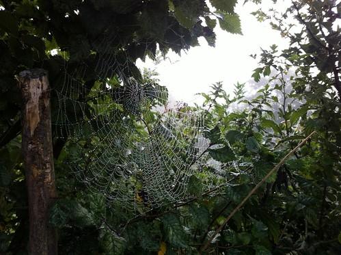 Cobweb by RickyRew
