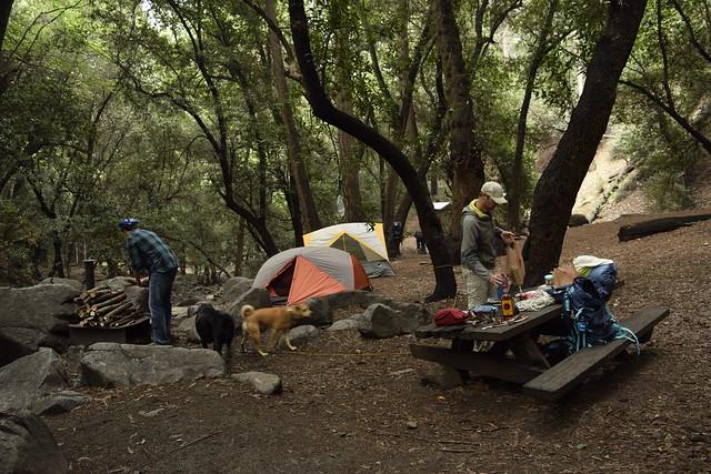 camp_sprucegrove