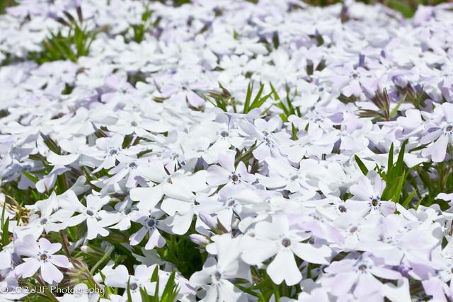 Field of White