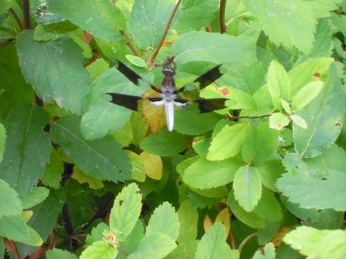 Aug 2 - new local wildlife sighting