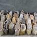 Polished Petrified Wood prices