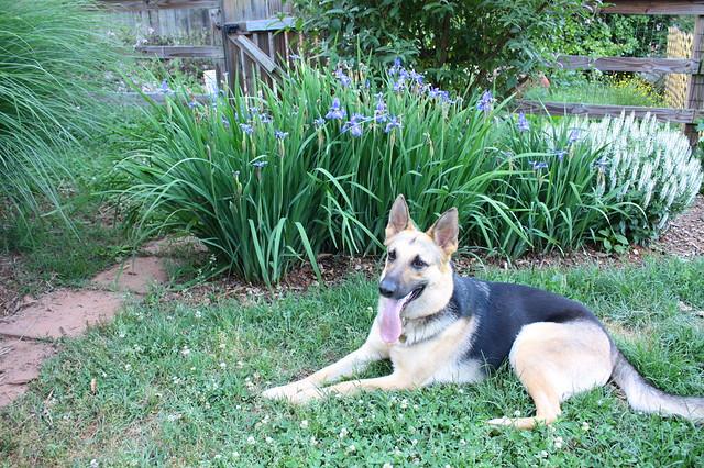 Pyrrha and wild iris