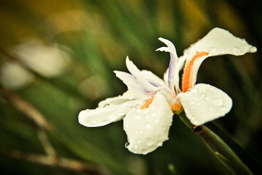 Flower, Baguio