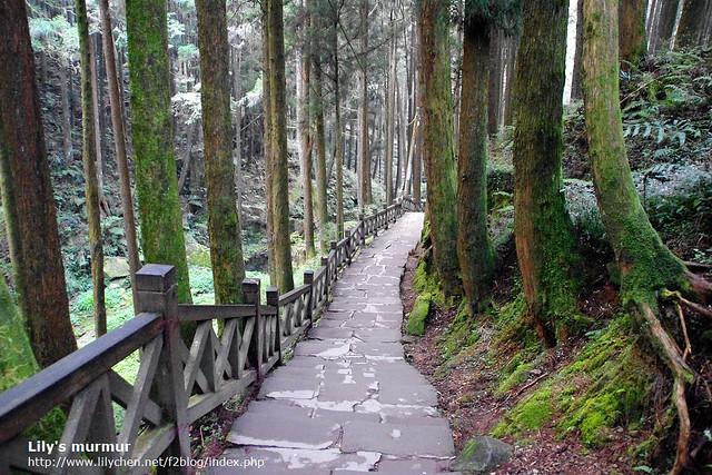 受鎮宮旁邊往巨木群的步道。