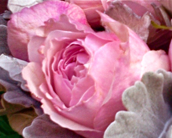 rosalind-3_2