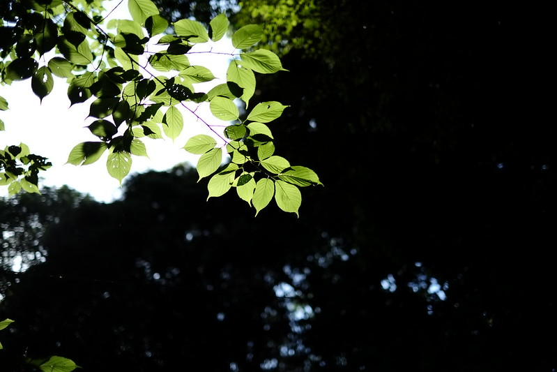 緑、光と影
