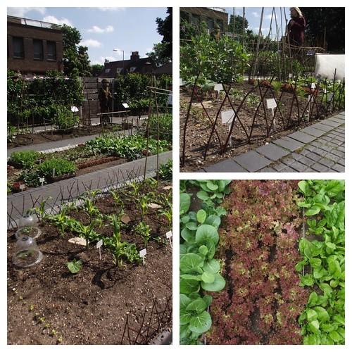 Vegetable patch - Kew