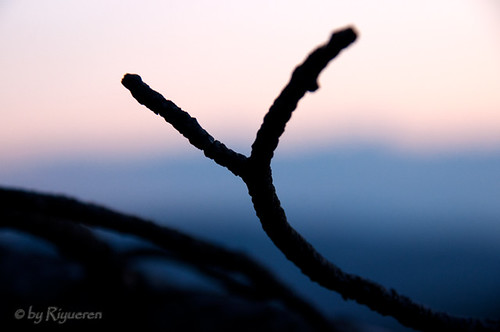 Branches at sunset