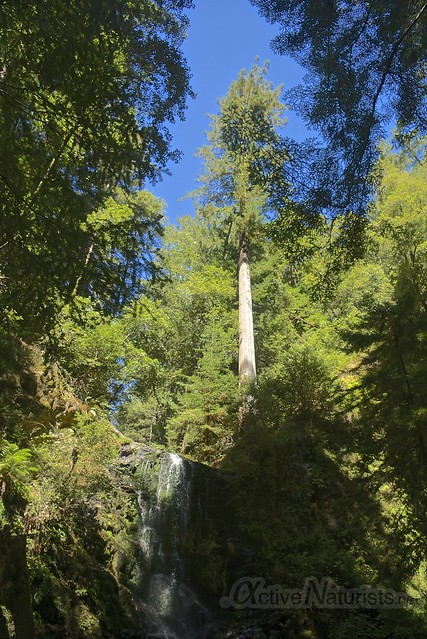 sequoia 0001 Big Basin Redwoods, CA, USA