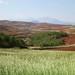Afforestation site