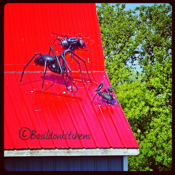 May 31 - on the roof {sculpture on a roof; a spider, fly & scorpion} Cool & a bit creepy too! #TitleFx #photoaday #princeedwardcounty #art #sculpture #fly #spider #scorpion #roof #redroof