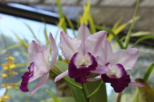 20130116_7329-orchids