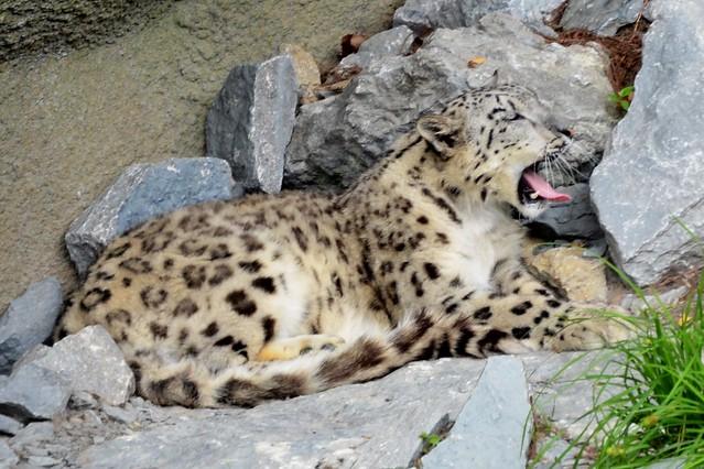 Yawning Renji