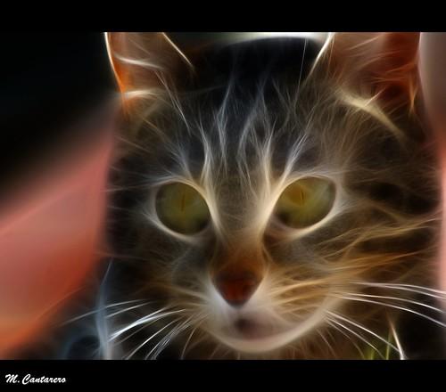 Cat-arsis!!!