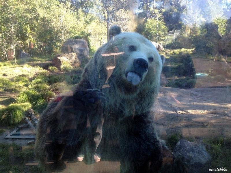 San Francisco Zoo (20)