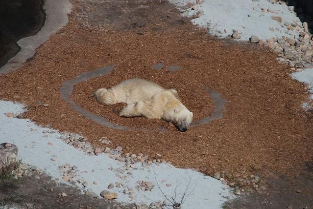"""København Zoo Eisbärenanlage """"Den Arktiske Ring"""" von oben"""
