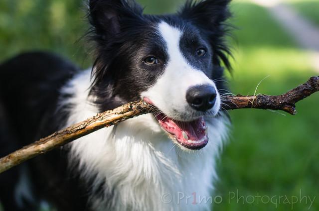 I have stick