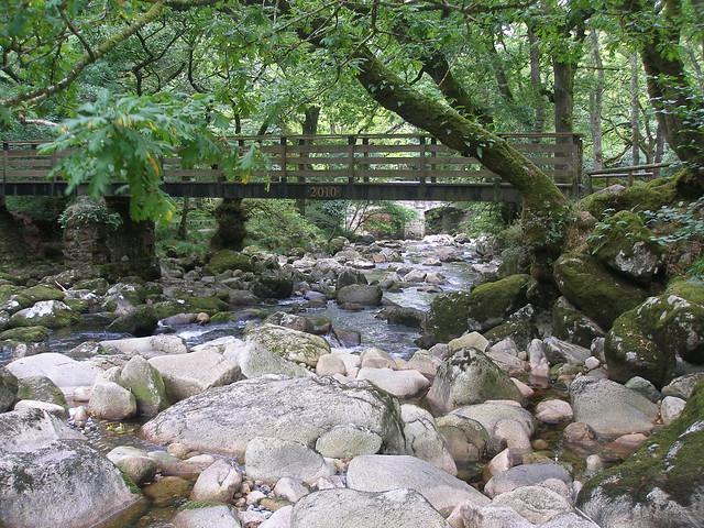 P91The River Plym near Shaugh Bridge