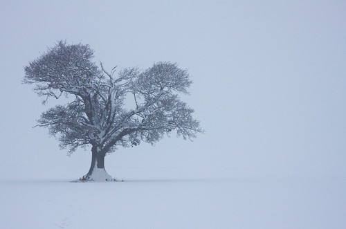 My Favourite Tree - Winter