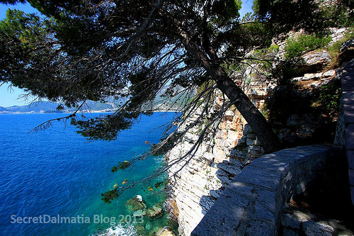 Just sea and rock... in the shade of a pine tree