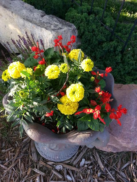 Flowers with Apollo