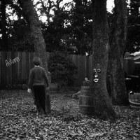 1113 - Autumn