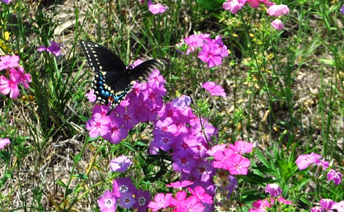 This Butterfly Enjoyed the Flowers, Too