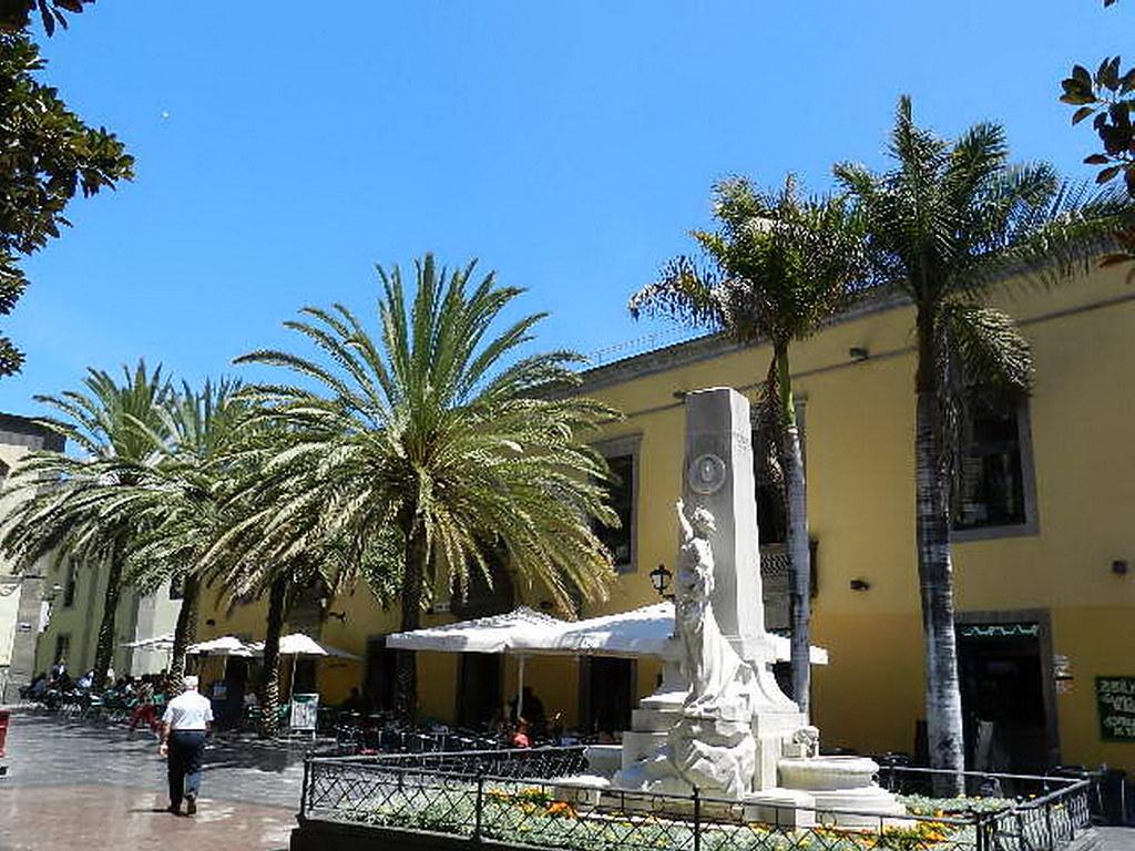 Arboles en Las Palmas de Gran Canaria 21