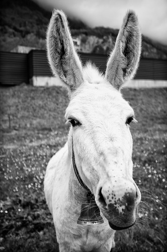 Donkey by ontourwithben
