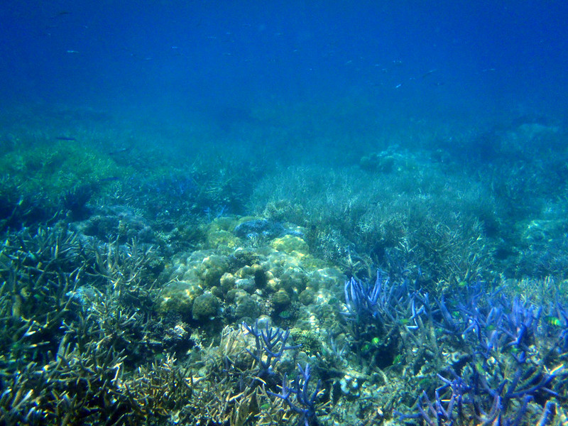 帛琉,浮潛,海島渡假 @薇樂莉 Love Viaggio | 旅行.生活.攝影