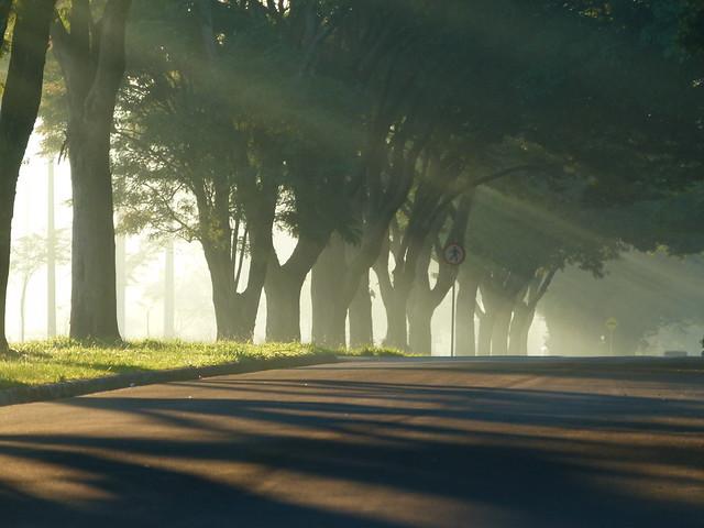 Manhã de neblina | Misty Morning