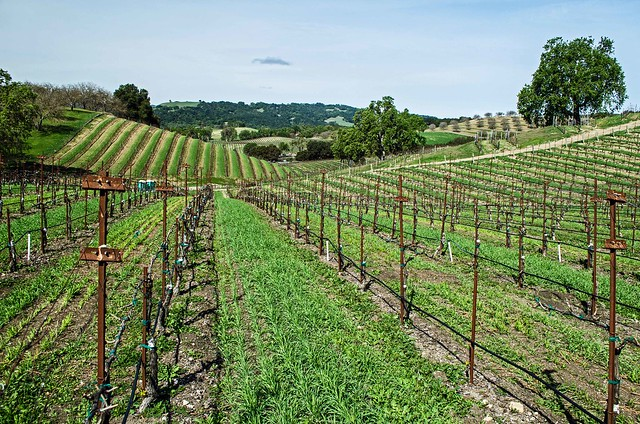 The Hilltop Trail features great views of the vineyard and the Adelaide Hills.
