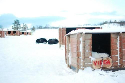 Tromso dog kennels