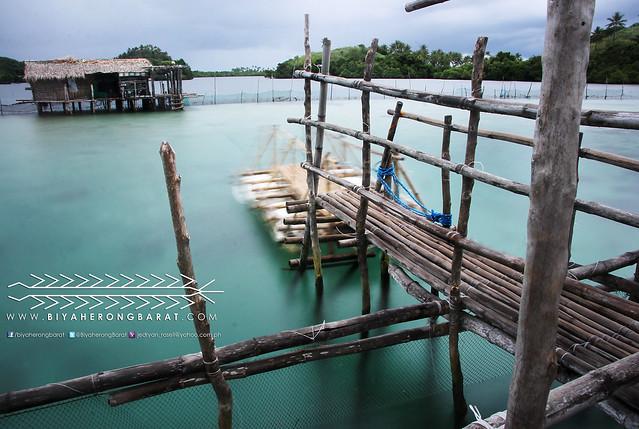 Juag Lagoon Marine Sanctuary Matnog Sorsogon Bicol