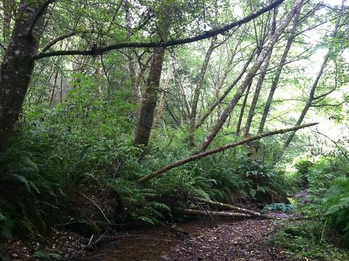 Creek, bear valley trail