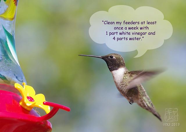 Hummingbird Dialogue 5