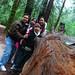 Northern California redwoods