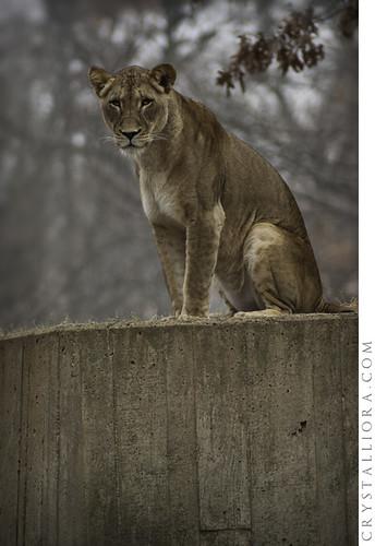 Zoo 02