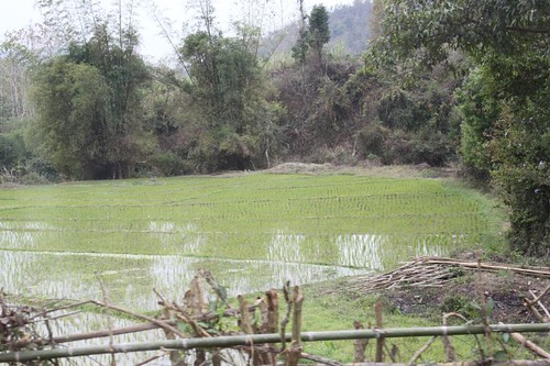 20120131_3229_paddy-fields