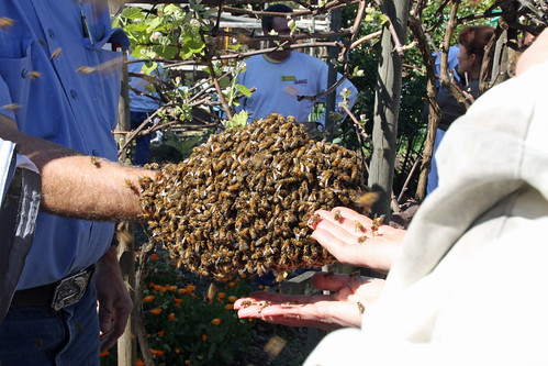 Bees on Hand