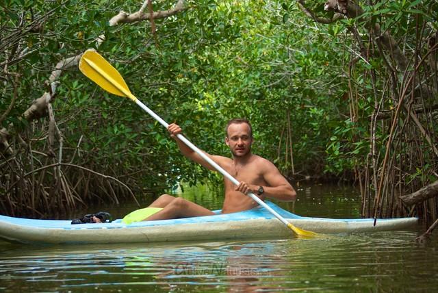 naturist 0003 mangroves, Progreso, Yucatan, Mexico