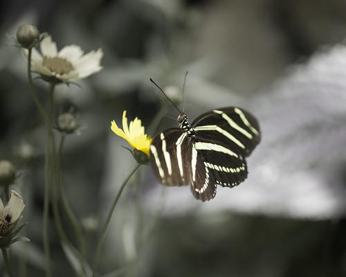 Krohn Conservatory Butterfly Show