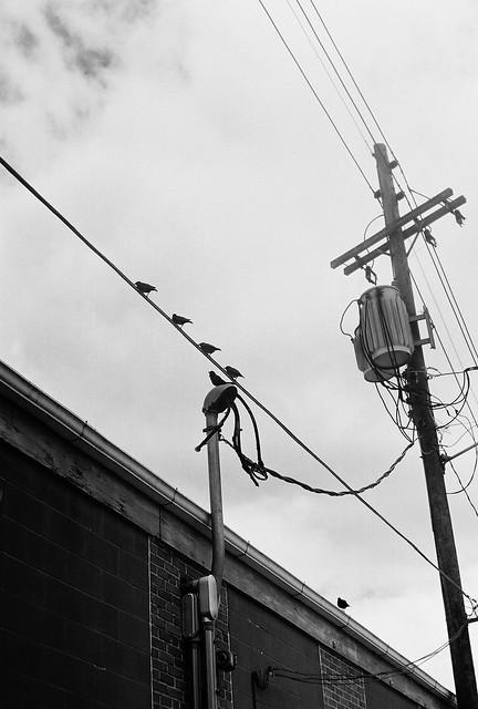 Birds black & white Leica M3 gallery32 photography
