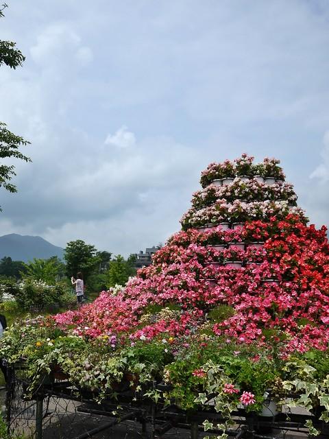 kawaguchiko flower festival
