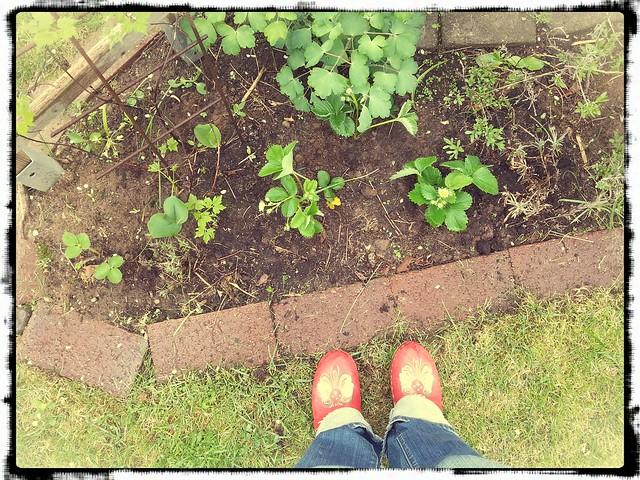 Träskor och jordgubbsplantor
