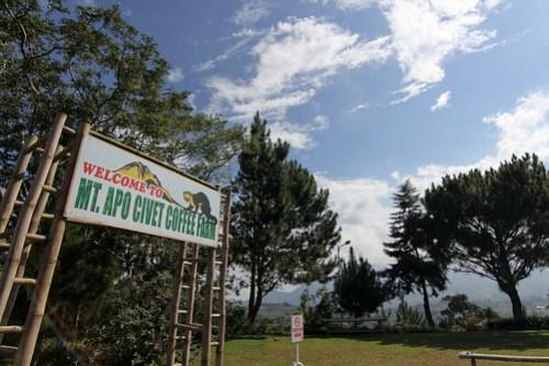 At Mt. Apo Civet Coffee Farm