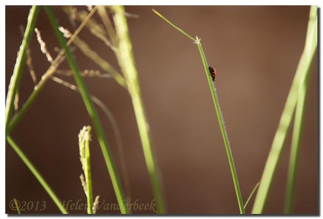 A Ladybug's Playground